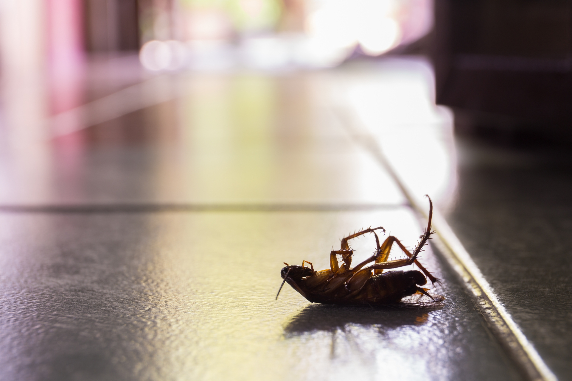 Cockroach Control, Pest Control in Earl's Court, SW5. Call Now 020 8166 9746