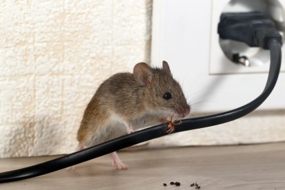 Pest Control in Earl's Court, SW5. Call Now! 020 8166 9746