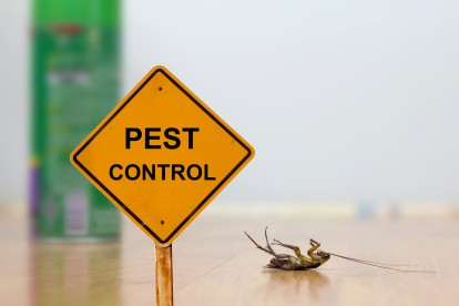 Pest Contol in Earl's Court, SW5. Call Now 020 8166 9746